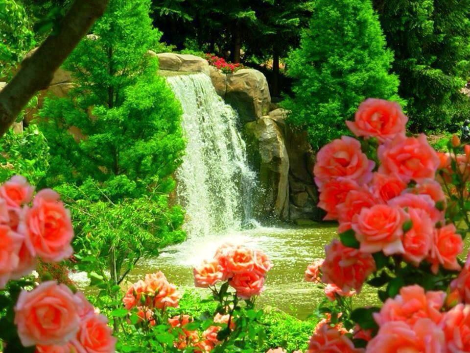 сад моей души фото как можно было