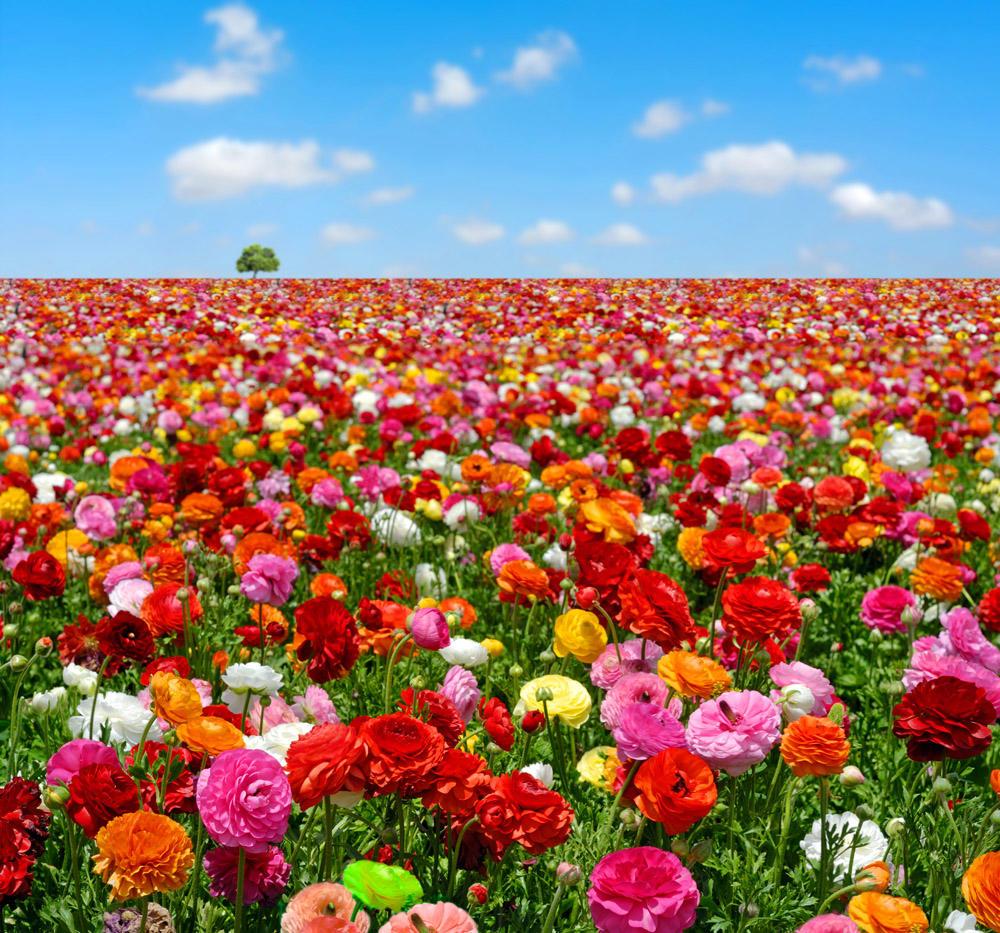 Картинки цветами