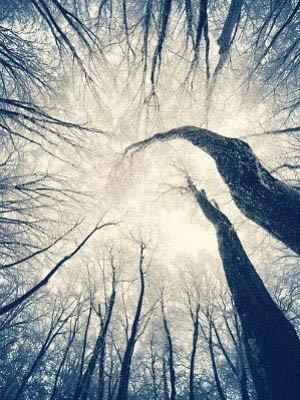 НОЧЬ ТИХА  Ночь тиха – Не спугни. Фотовспышками гроз Засверкает рассвет, В горизонт окунаясь.   Дождь – стиха Ученик Льё...
