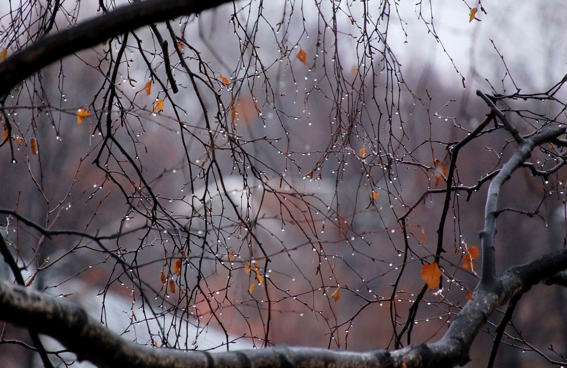 Осенний антураж
