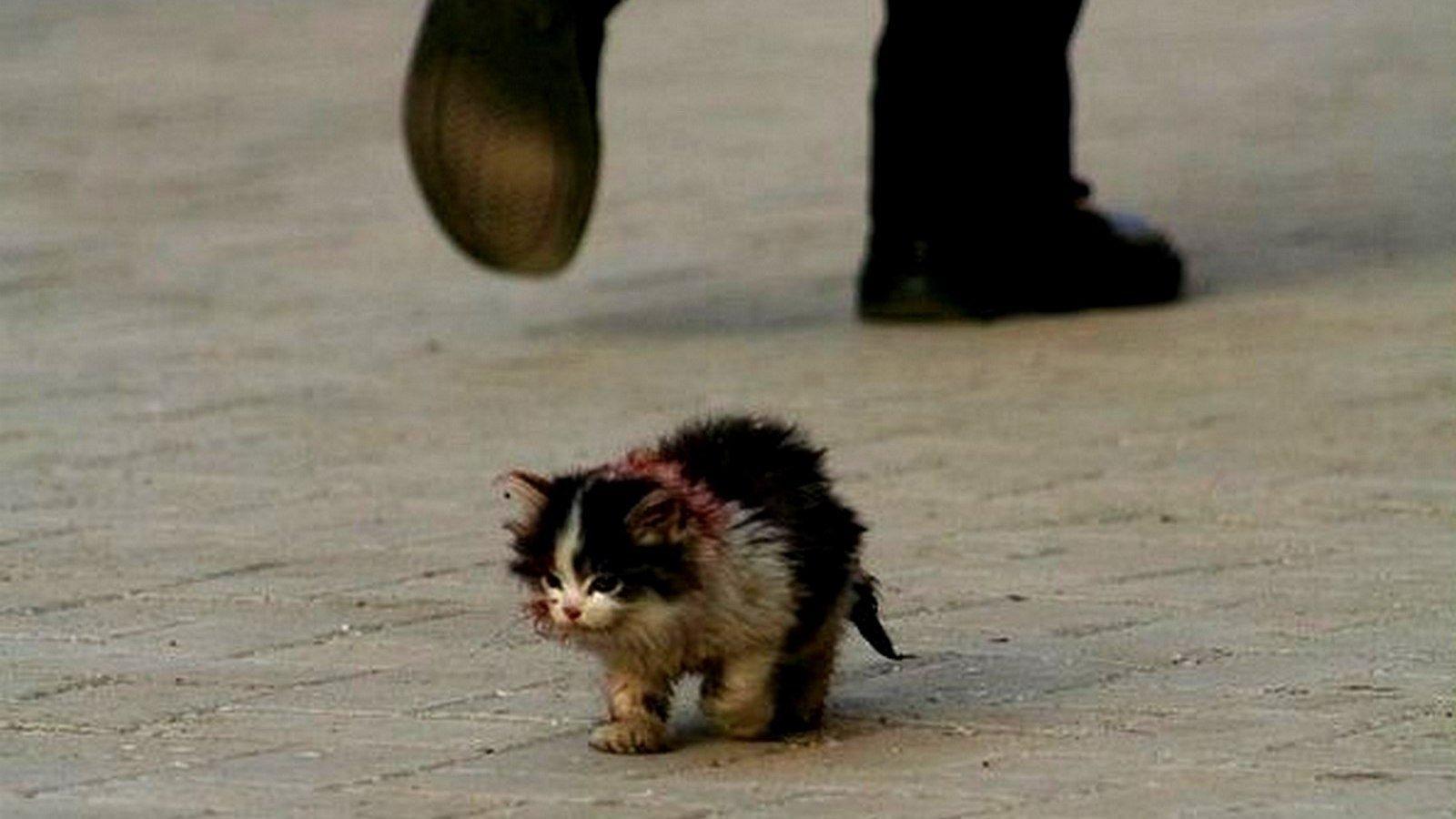 Бездомный котенок фото 5