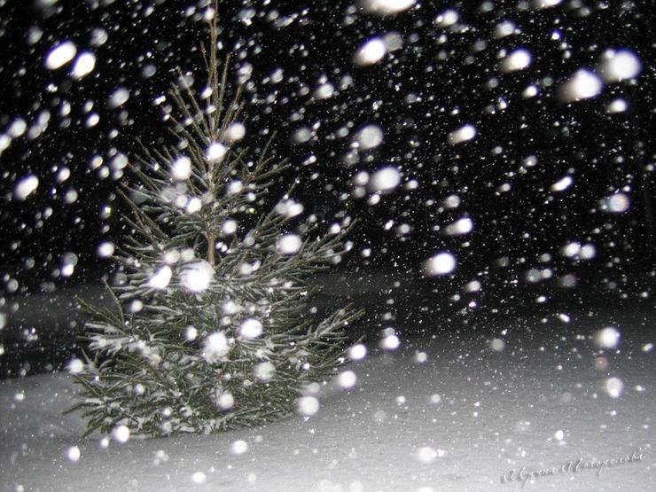 днем картинки снега в воздухе взрослые детки