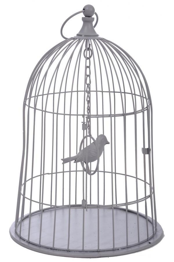 Птицы в клетке картинка для детей