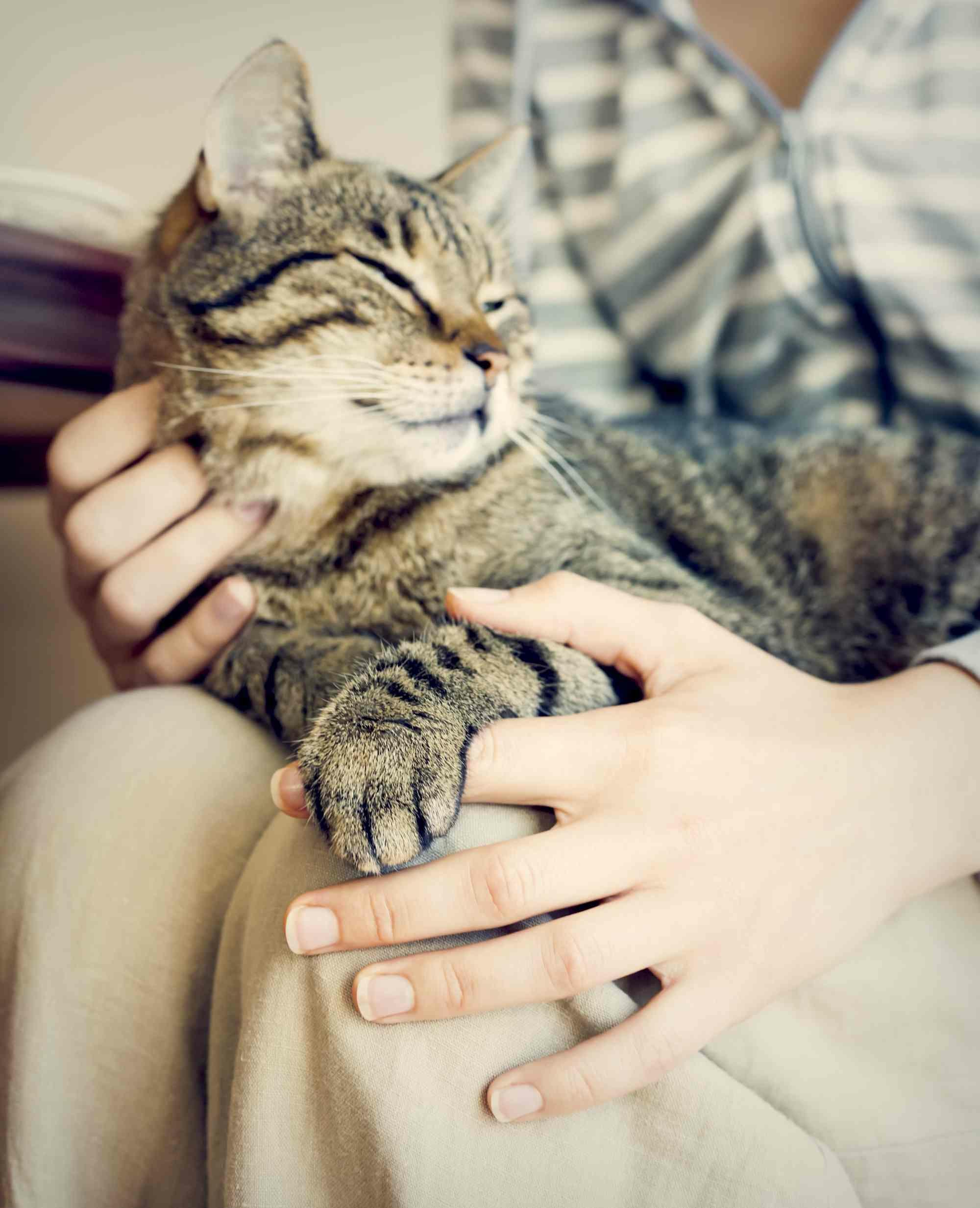 красивые руки гладят котенка фото вот те, кто