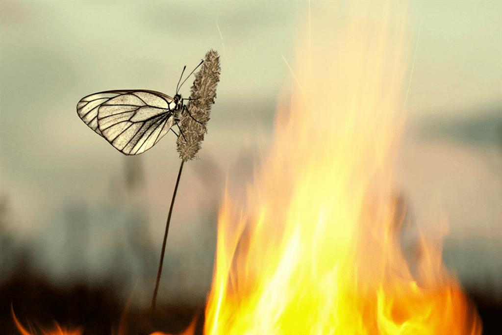 картинки мотылек летит на огонь и вода создании собственных