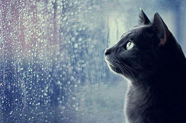 Киев - серый кот