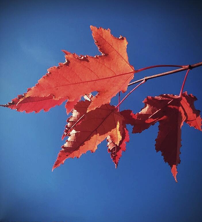 Сквозь осенние листья