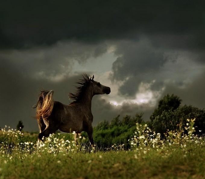 Тёплый ветер ночной в конской гриве дрожал, И высокие травы сгибались упруго. Вскинув голову к небу, буланый заржал И рванулся....