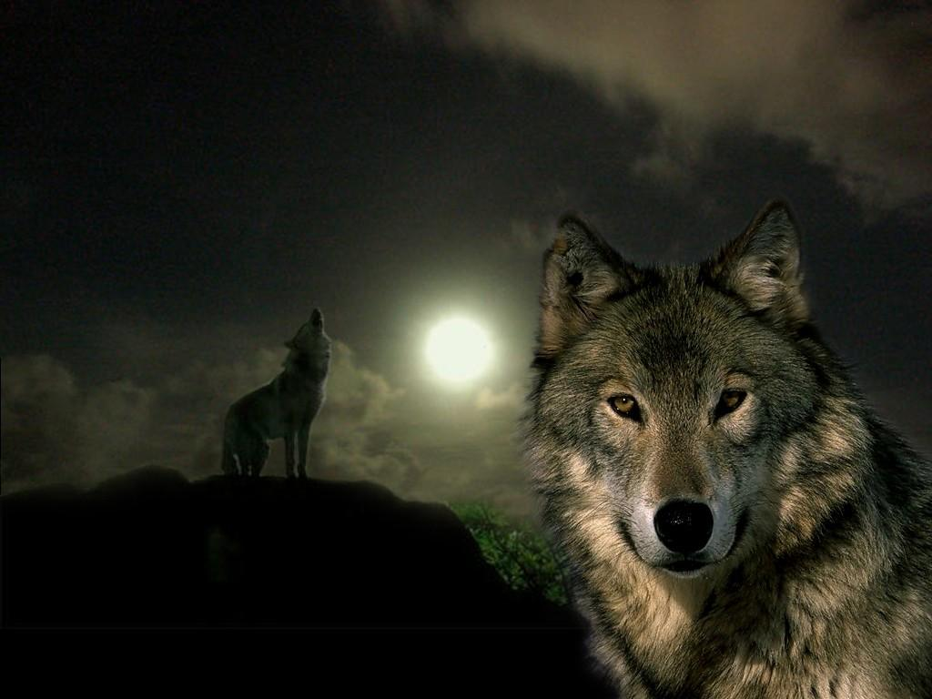 Картинки волчицы на аву с надписями, другу для детей