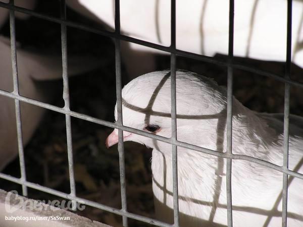 Сонник птиц в клетку сажать 31