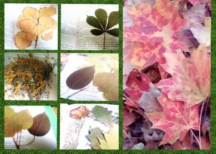 Осенью сжигают листья