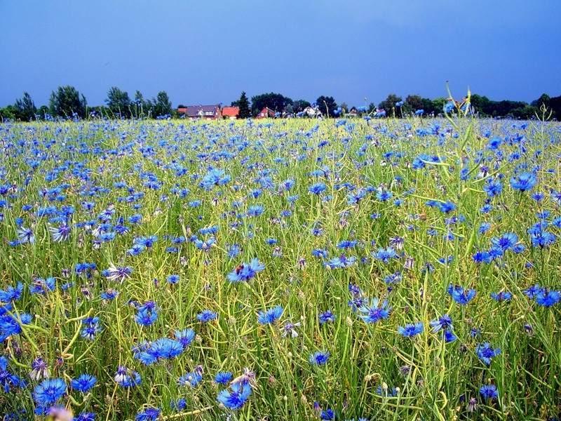 термобелье в синем поле васильки дальняя дорога для
