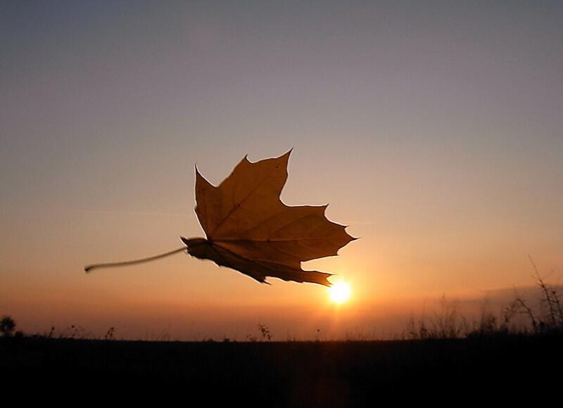Осени спесь