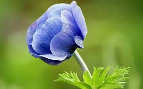 Природа сильнее нас...