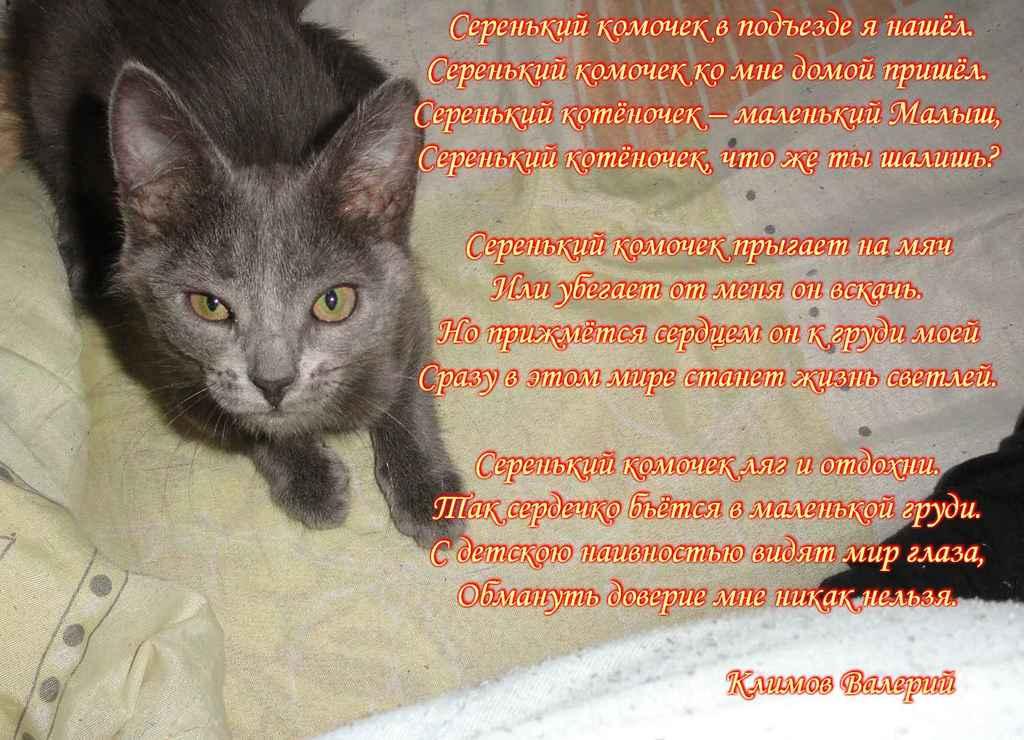 Стихи к подарку кошек 512