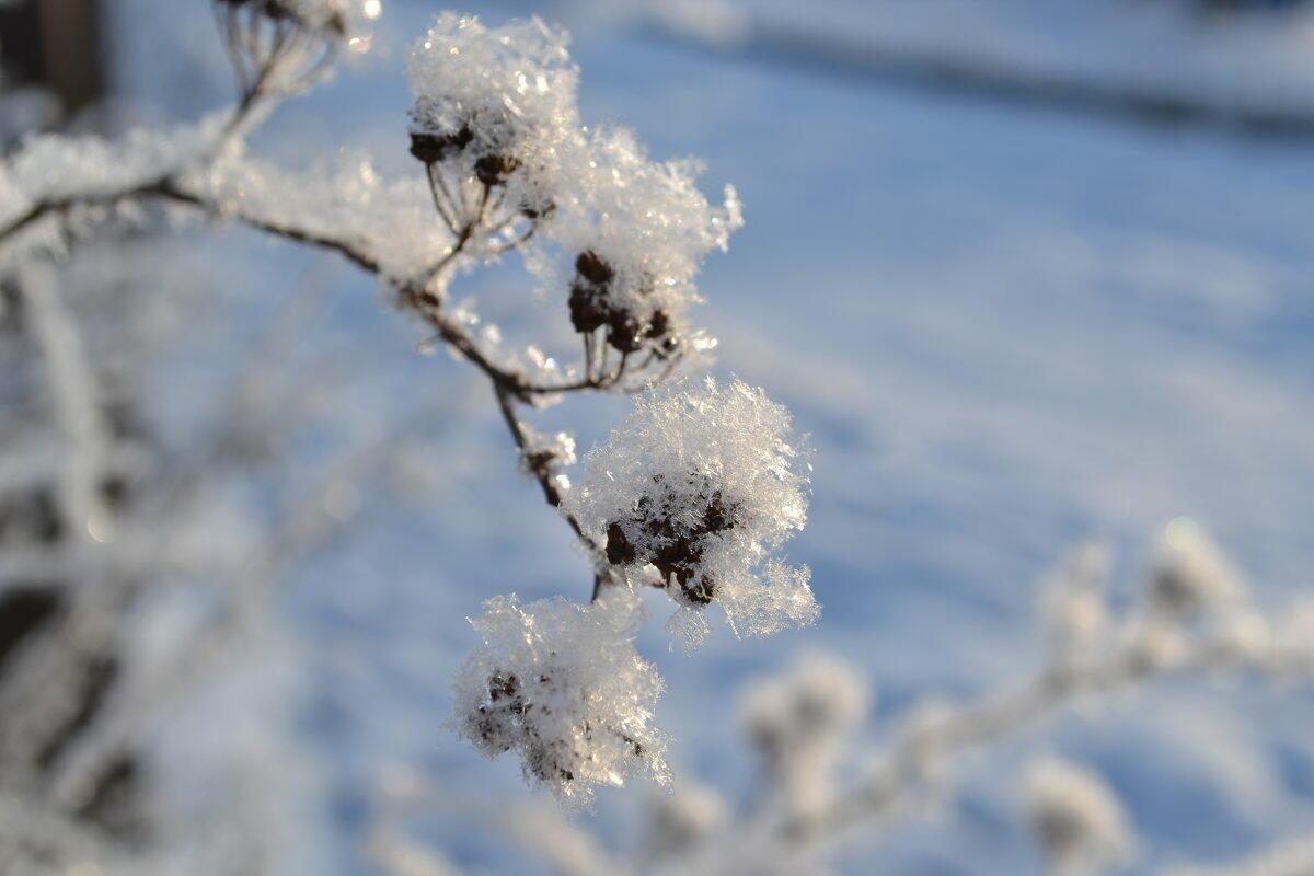 Вот и зима ( С Деминой Галиной)