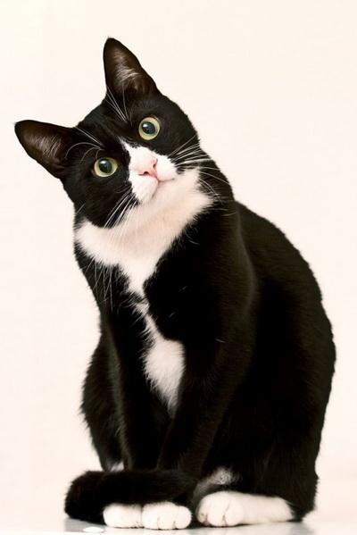 Царей у кошек не бывает