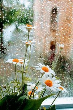 Дождь  зовет