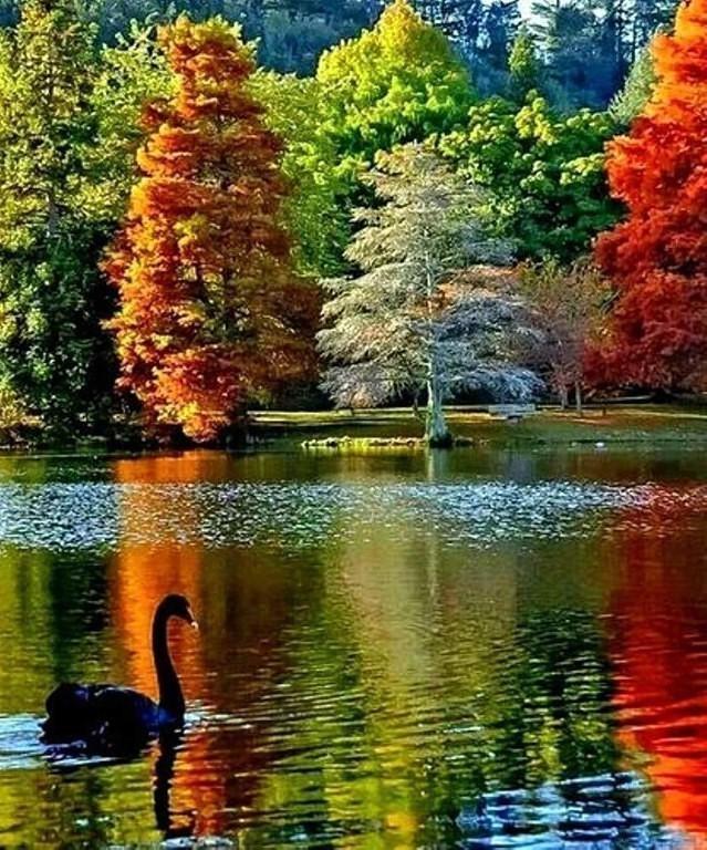 Все краски осени сошлись