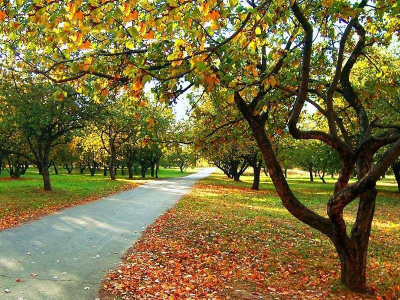 Осень наступила, лето убежало