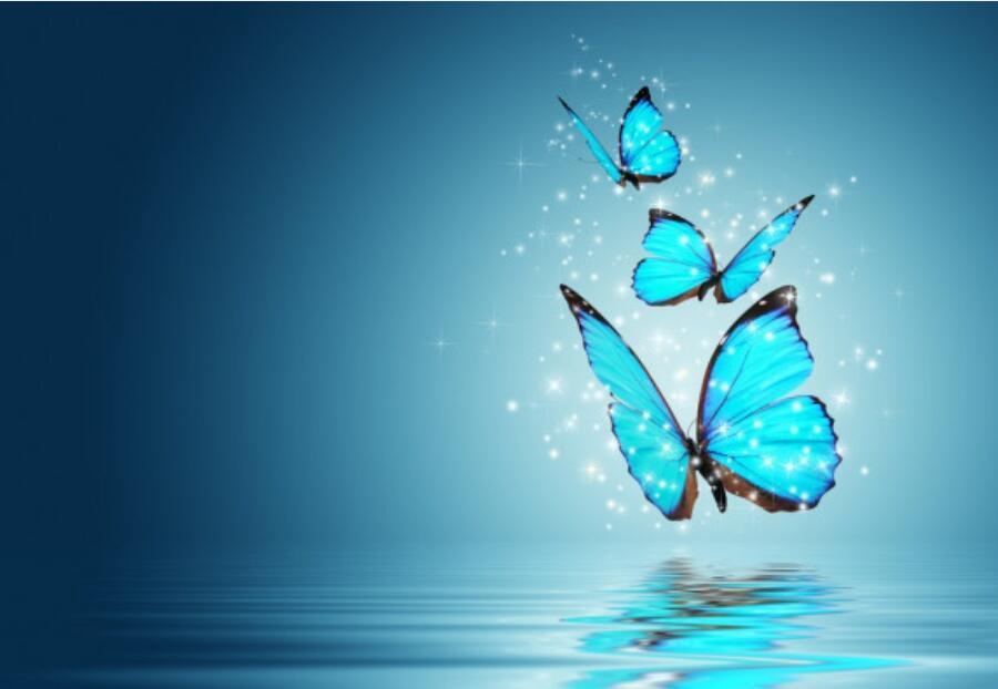 Улетают бабочки на юг
