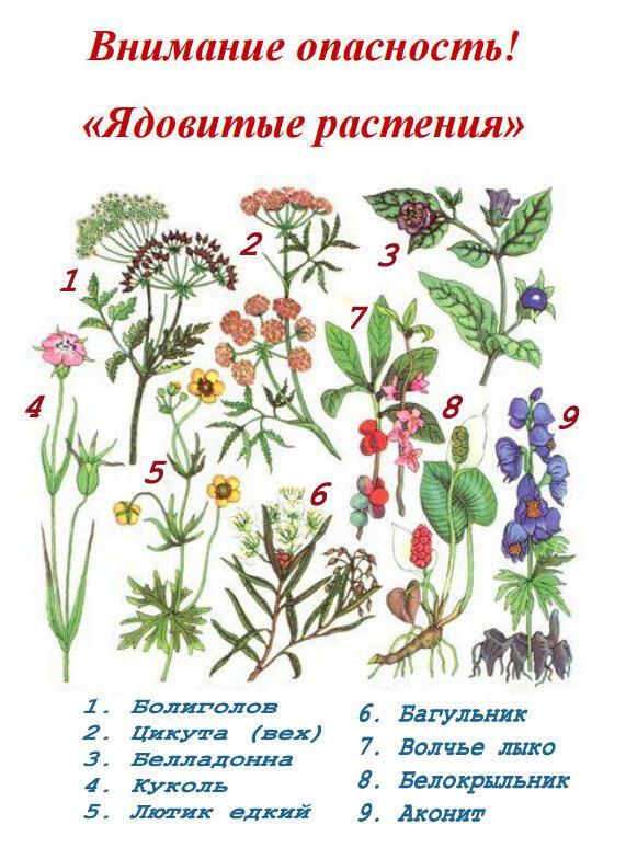 Биология. О ядовитой флоре