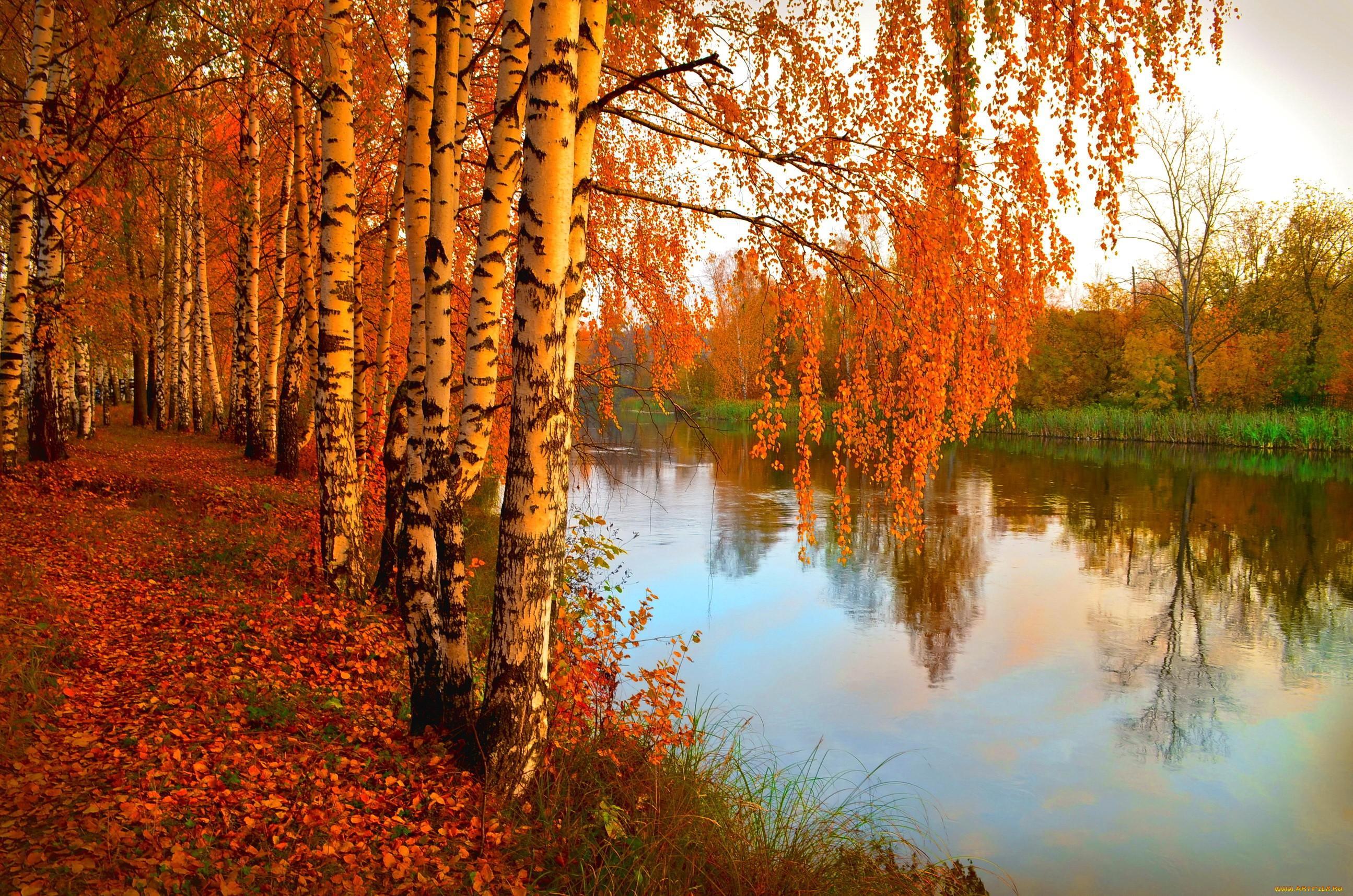 золотая осень лучшие фотопейзажи движения