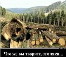 Слёзы леса