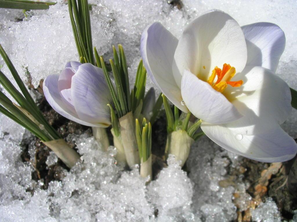 Лучшие картинки с первым днем весны