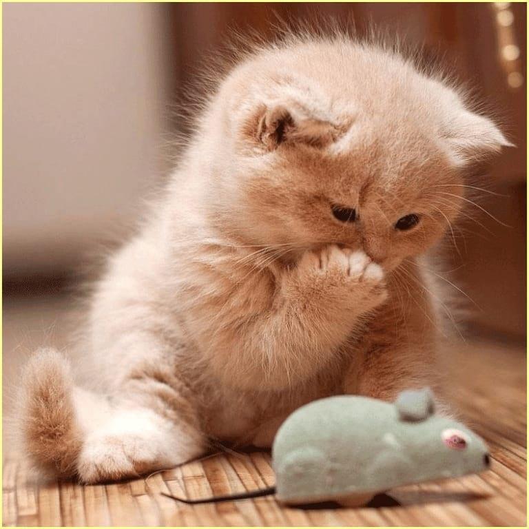Котенок плачет на пороге