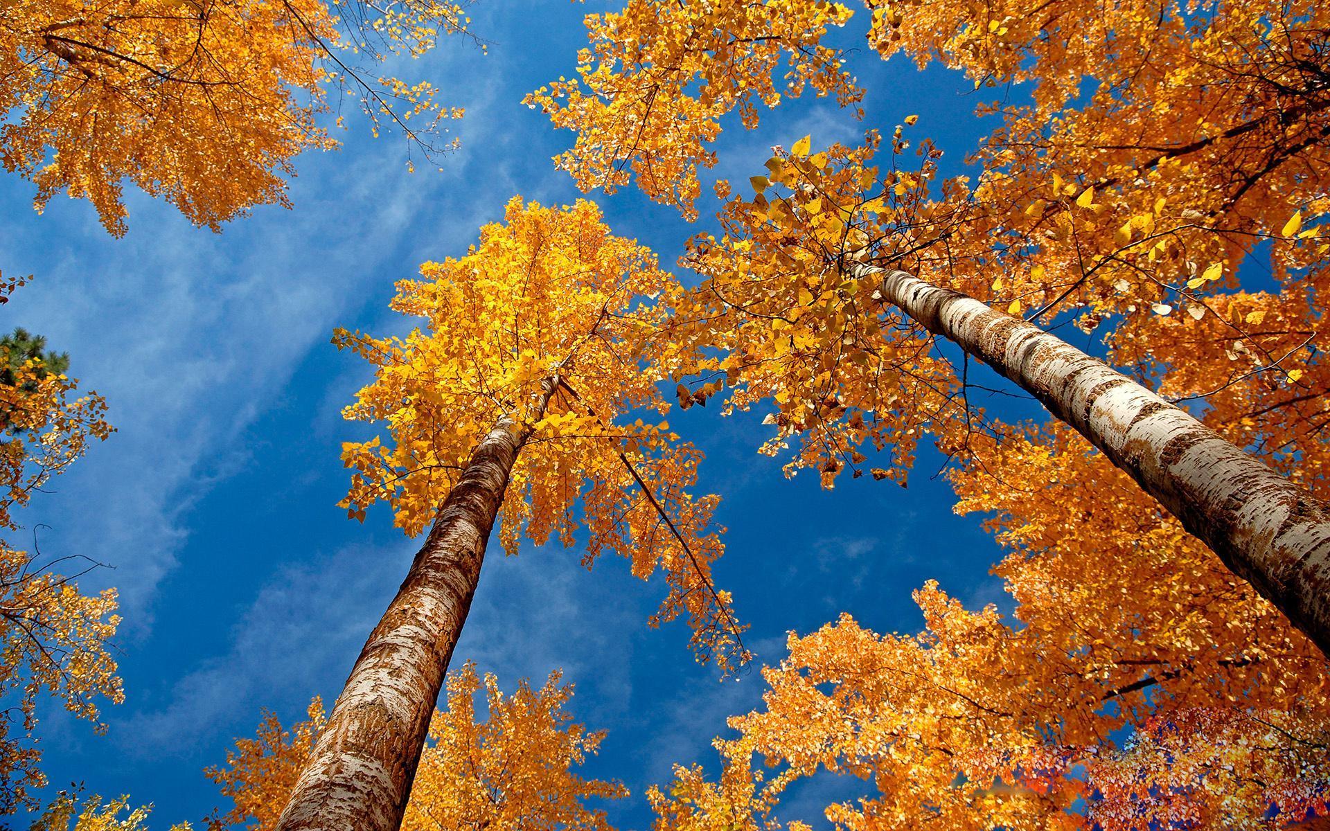 Золотая подруга осень картинки