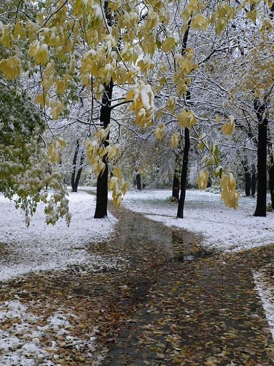 картинка на телефон первый снег центральное место