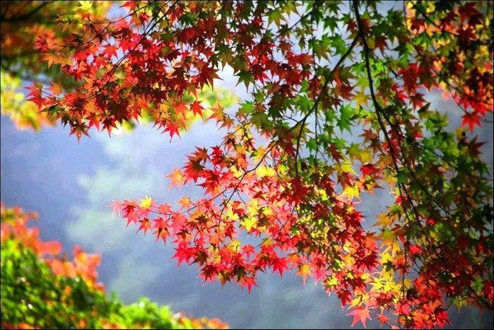 Природа красками балует нас...