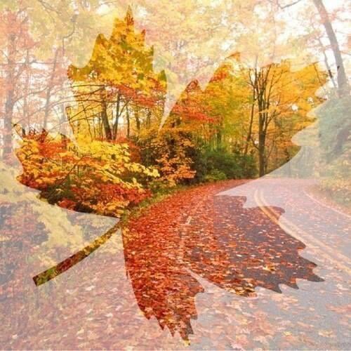 Осень время правит.