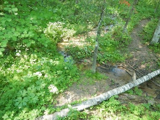 Оленьи ручьи-35