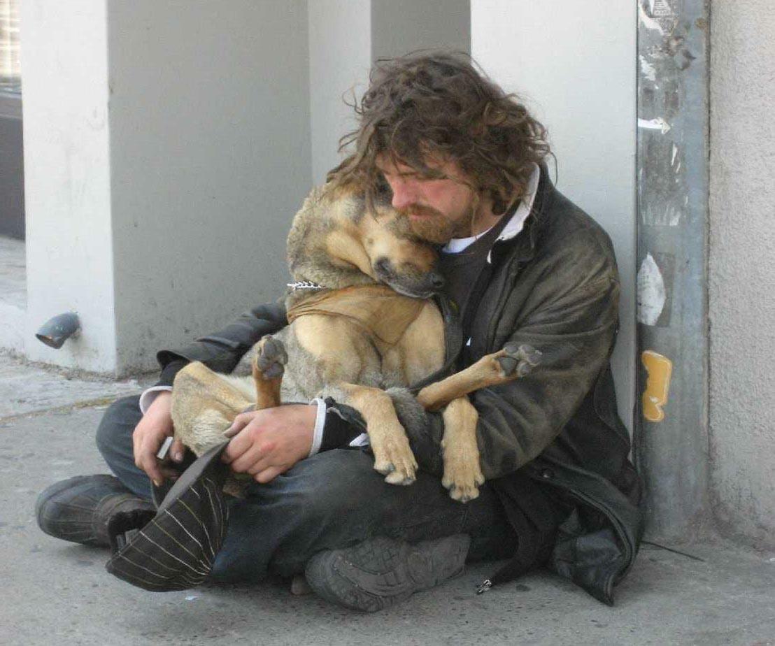 картинки нищета и собаки большинстве случаев резные
