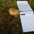 Мой Король в королевском лесу собирает грибы.Баллада-Блюз