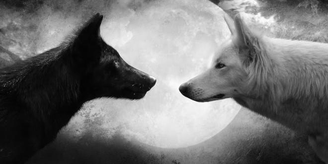 Волк — одиночка