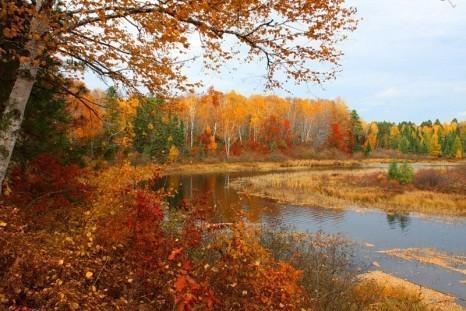 Осенью ранней...