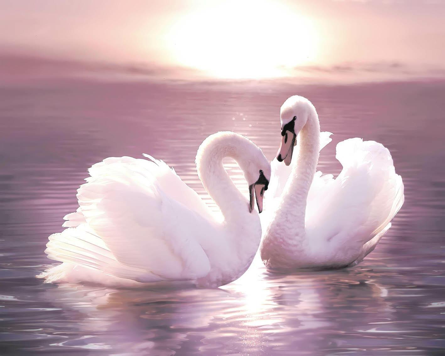 Картинка с лебедями на свадьбу