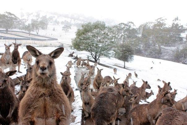 В Австралии...