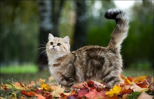 Кошку вывели гулять, Двор она не знала, И,пригнувшись,до земли К подвалу побежала.  А подвал тот был забит Железною решёткой...