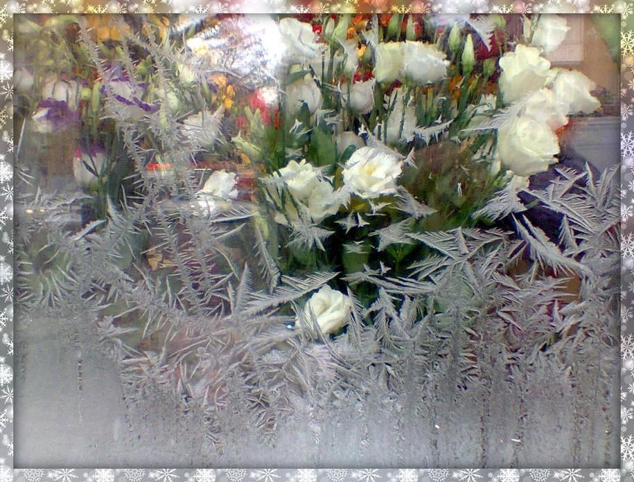 Розы на стекле