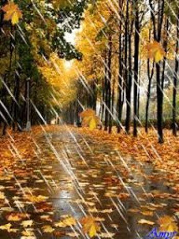 дождь осенний картинки