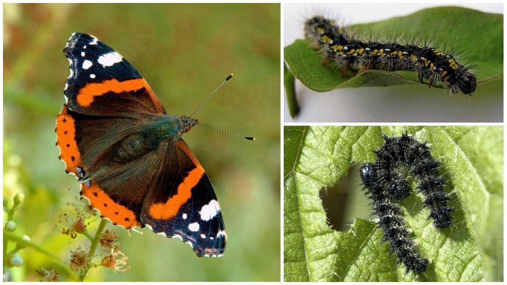 Из гусениц в бабочек