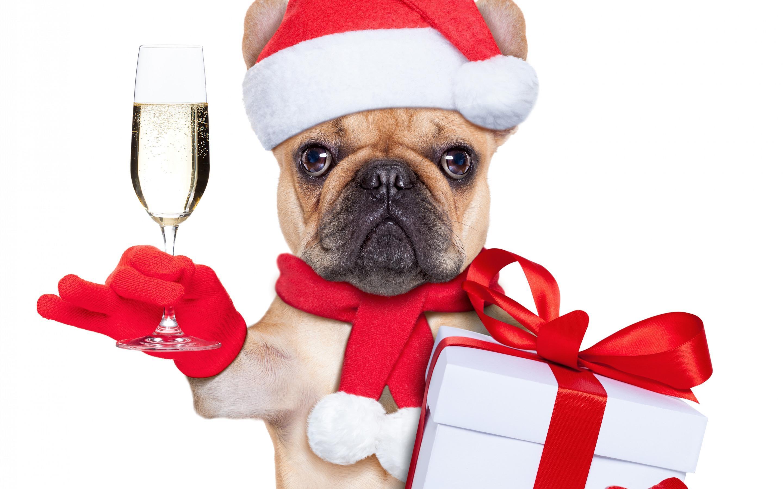 Открытка с собачкой с новым годом