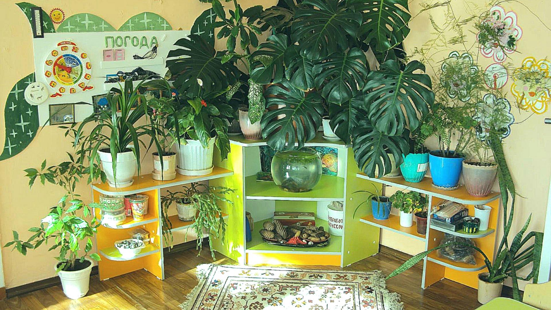 Экологическая тропа в дошкольном образовательном Экологический дизайн в доу