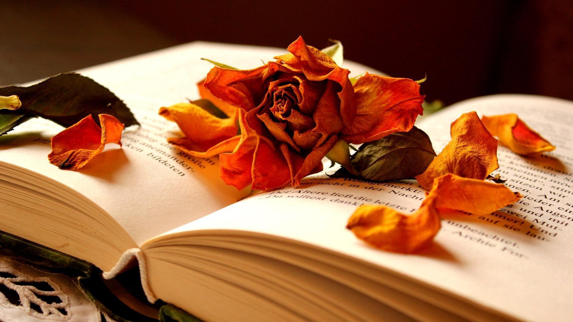 Открытки на заставку в телефон поэзия