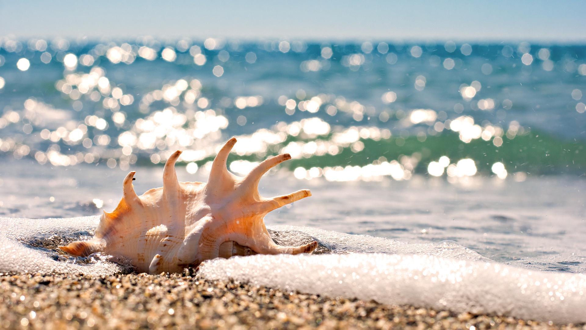 открытки море пляж солнце считаю