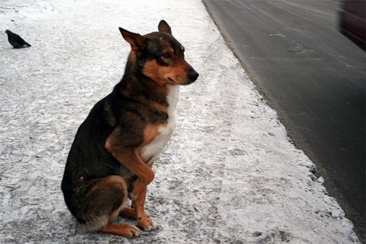 Сидел на остановке пёс